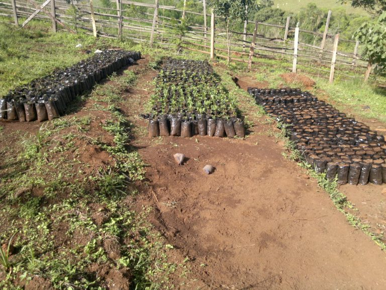 agric farm
